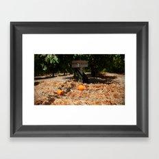 Apricot trees Framed Art Print
