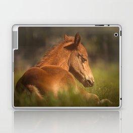 Cute Foal Laying Down Laptop & iPad Skin