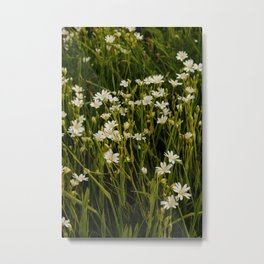 Pimpernels   Wildflowers   Botanical and Floral Photography Metal Print