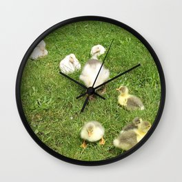 cute baby animals, small ducks and geese on a green meadow in summer Wall Clock