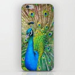 Beautiful Peacock (Color) iPhone Skin