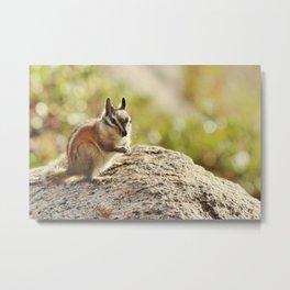 Yosemite Chipmunk Metal Print