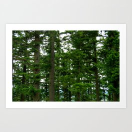 Forest From the Trees Art Print