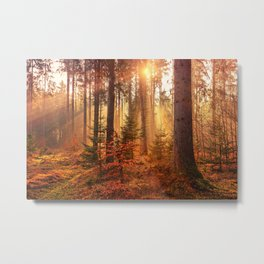 Autumn Landscape Forest Photograph Metal Print