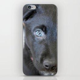 Puppy Face iPhone Skin