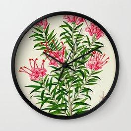 Grevillea Rosea Vintage Botanical Floral Flower Plant Scientific Illustration Wall Clock