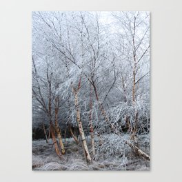 Frosty Trees in Winter Snow Canvas Print