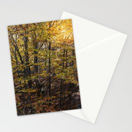 Beech forest in Autumn Stationery Cards