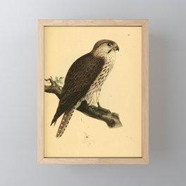 falco feldeggii 217 Framed Mini Art Print
