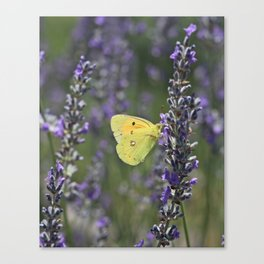Yellow Butterfly On Lavender Canvas Print