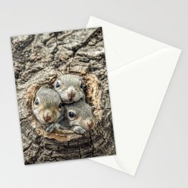 Peekaboo Baby Squirrels  Stationery Cards