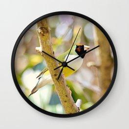 Peaceful Gouldian Wall Clock