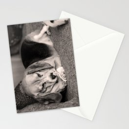 The Nicest Nibbles Stationery Cards
