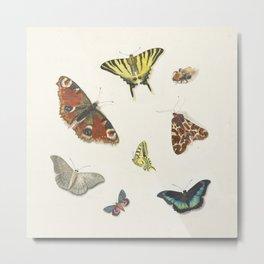 Ensemble de papillons  {II/II} Metal Print