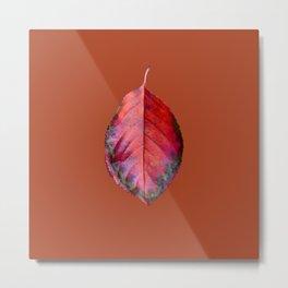Leaf Brown Metal Print