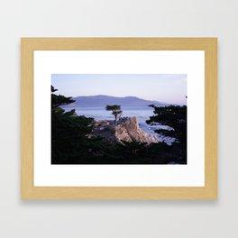 Lonely Cypress in October Framed Art Print