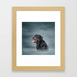 Rottweiler dog Framed Art Print
