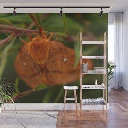 Orange-tipped Oakworm Moth Wall Mural
