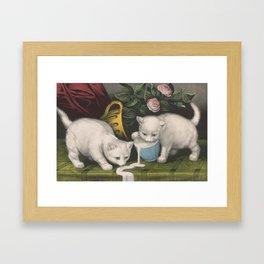 cute kitten 3- Anonymous - Little white kitties -pet,whikers,cat,kitty,kitten Framed Art Print