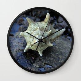Murex Wall Clock