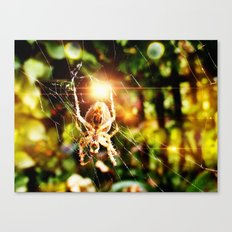 Spider Bokeh Canvas Print