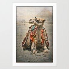 Camel at Giza Art Print