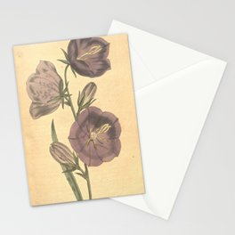 Flower 397 campanula persicifolia maxima Greatest flowered Peach leaved Bell 19 Stationery Cards