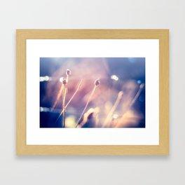 Winter Flowers (Color Photograph) Framed Art Print