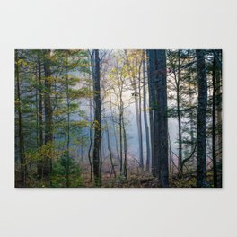 Mystic Forest - Early Morning Glow in Smoky Mountains Canvas Print