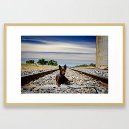 Australian Kelpie on the tracks Framed Art Print