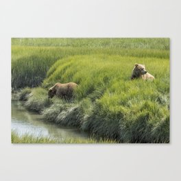 Two Brown Bear Cubs in a Meadow of Variegated Greens Canvas Print