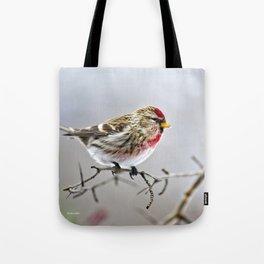 Winter Redpoll Bird Tote Bag