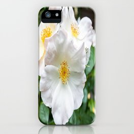Camellia Bloom Flower iPhone Case