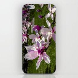 Magnolia flowers in the backyard iPhone Skin