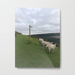 Guidepost amongst sheep Metal Print