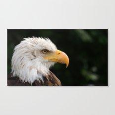 MM - Grinning bald eagle Canvas Print