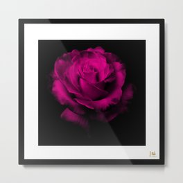 Beautiful Magenta Rose Metal Print