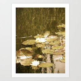 Monet's Pond  Art Print