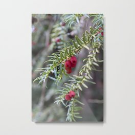 Autumnal Berries Metal Print