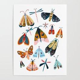 Moth Species Poster