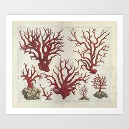 Naturalist Red Coral Art Print