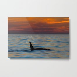 Orca Male Sunset Metal Print