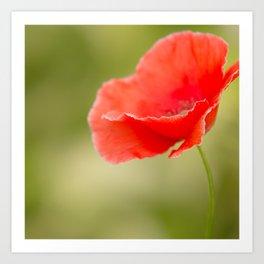 Miss you so much Red Poppy #decor #society6 Art Print