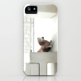 Dachshund, Carlsbad, California iPhone Case