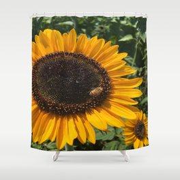 Sunflower and Honeybee Shower Curtain