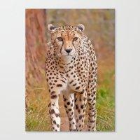 cheetah Canvas Prints featuring Cheetah by Chris Thaxter