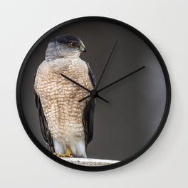 Red eyed Coopers Hawk Wall Clock