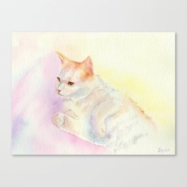 Playful Cat III Canvas Print