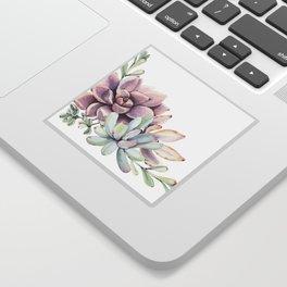 Desert Succulents on White Sticker