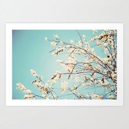 Spring Willows Art Print
